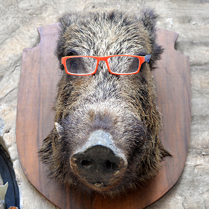 the stuffed and mounted head of a wild boar, wearing red-framed glasses