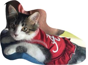 cat in a UA dress